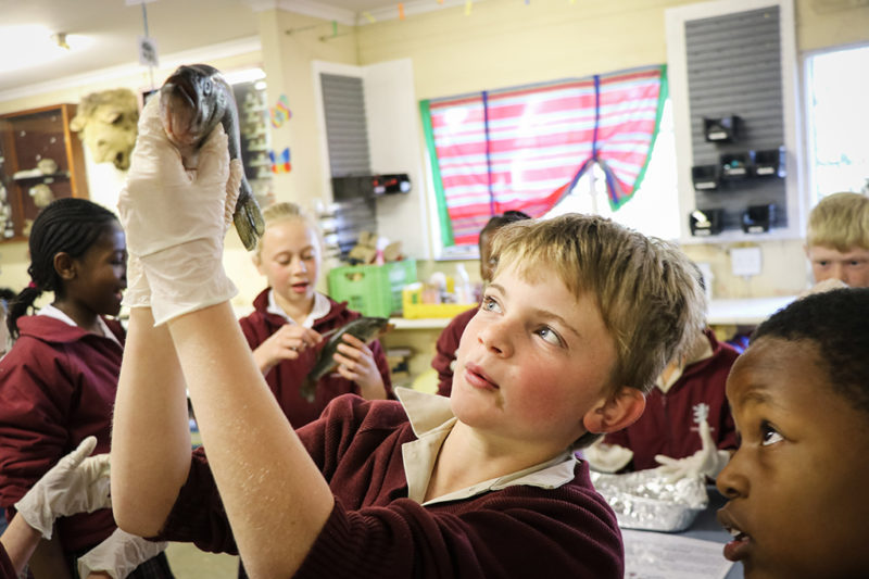 Grade 4 Fish Dissection