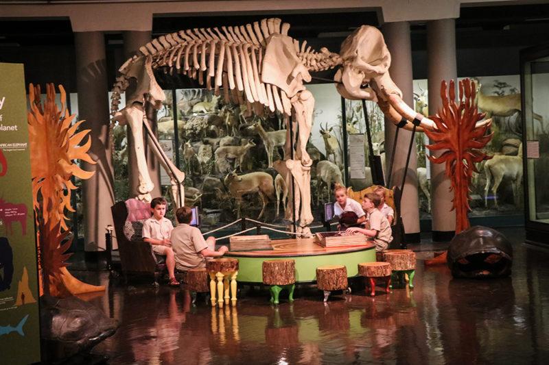 Grade 4 Natal Museum Excursion