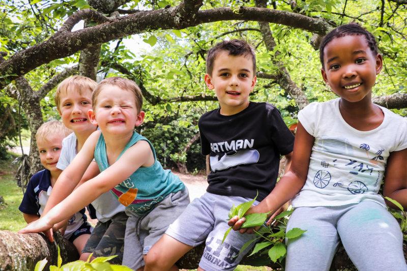 Cowan Cubs in Trees